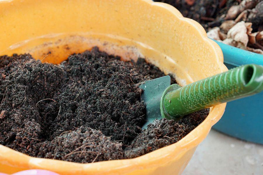 تقویت خاک گلدان : 5 روش مناسب برای تقویت خاک گلدان و باغچه