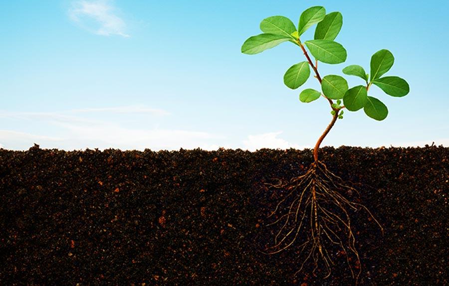 فسفر در گیاه