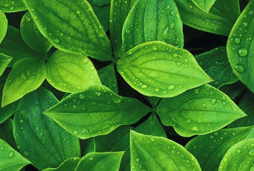 پتاسیم در گیاه