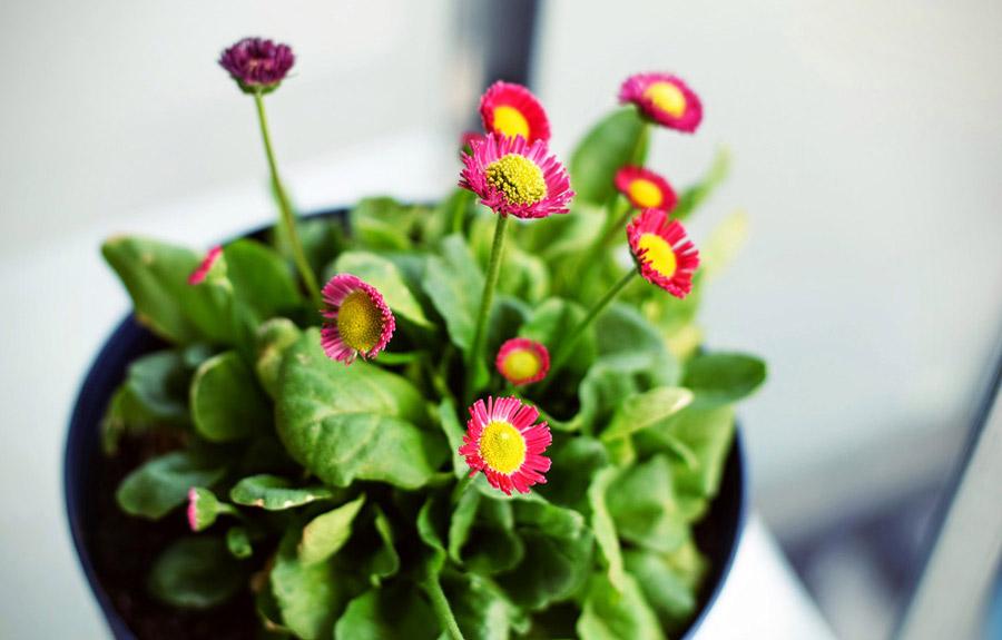 چگونه از گیاهان خانگی مراقبت کنیم؟