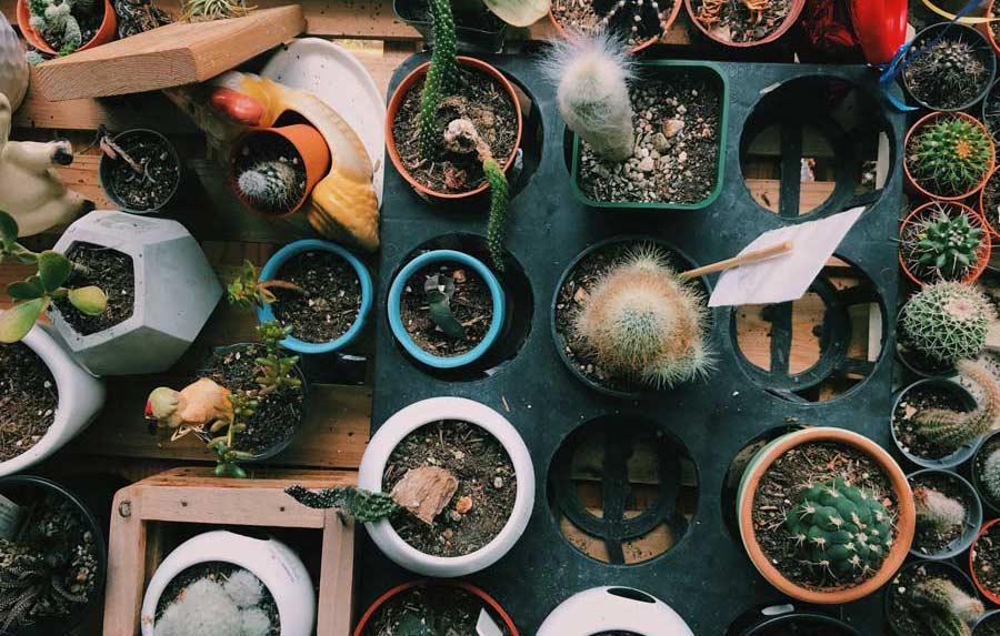 چگونه به یک گیاه در حال رشد، کود بدهیم؟